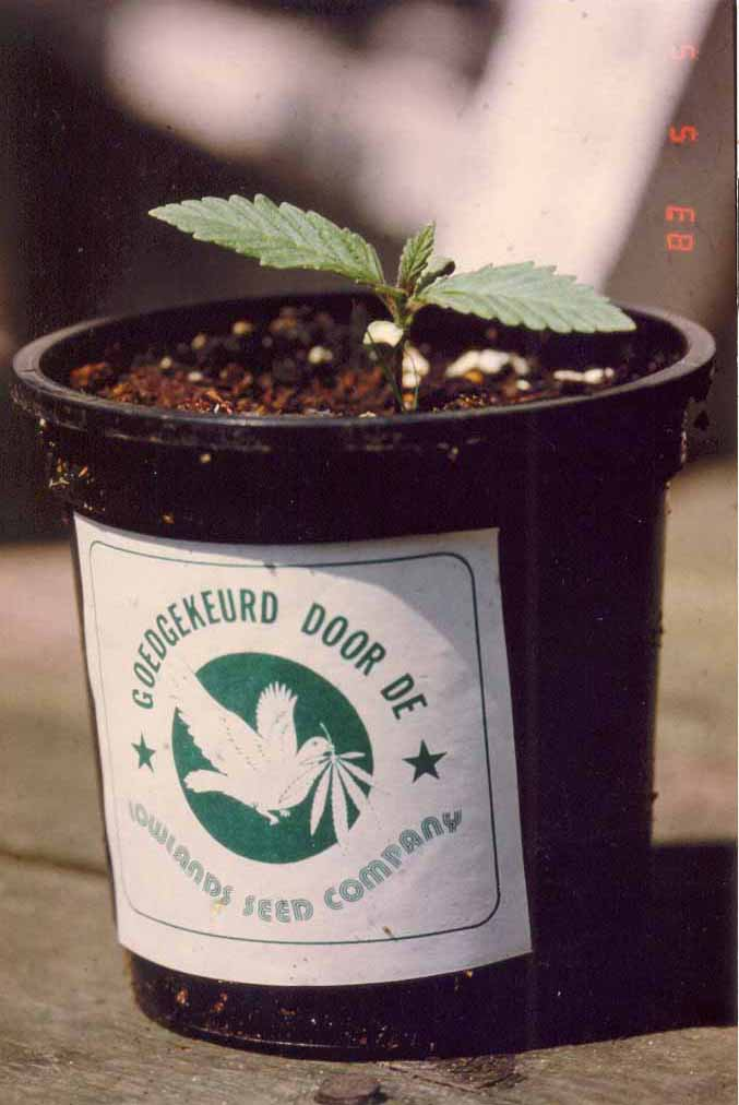 Plants aproved by Lowlands Seed Co.
